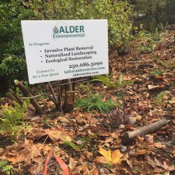 Alder signage at restored stream site.